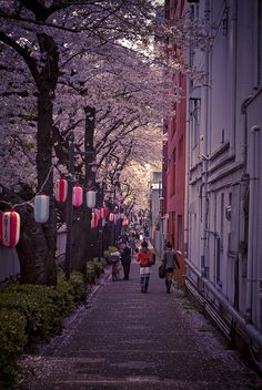 Expand your horizons at Tokyo University: http://global.arizona.edu/study-abroad/program/tokyo-international-university-direct-enroll