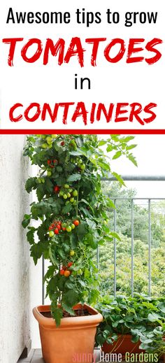 If you have a small space to grow tomatoes, you can grow tomatoes in containers. Growing tomatoes in containers is a great way to have a garden in a small space. #growingtomatoesincontainers #tomatoes #growtomatoes #gardening Growing Cherry Tomatoes, Tips For Growing Tomatoes, Grow Tomatoes, Growing Vegetables In Containers, Growing Veggies, Growing Plants, Vegetable Garden For Beginners, Gardening For Beginners, Gardening Tips