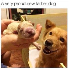 Cute Feel Good Wholesome Memes To Make Your Day