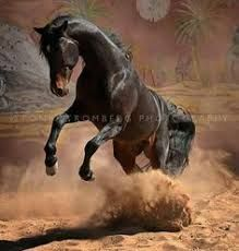 Image result for Tony Stromberg Horses And Dogs, Cute Horses, Pretty Horses, Wild Horses, Show Horses, Animals And Pets, Beautiful Horse Pictures, Beautiful Horses, Animals Beautiful