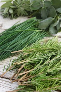 Herbs. tips on drying and preserving your crop.