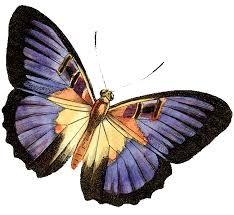Resultado de imagem para borboleta hd png