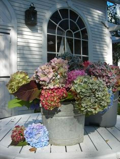 hydrangeas...wish I could grow such an array of colors