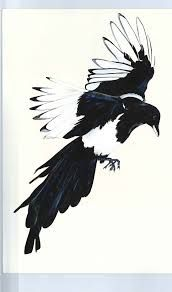 magpie illustration - Google Search