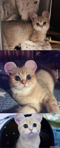 That's just not fair ...... It's too CUTE!!!!