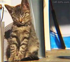 Cute Kitten GIF • Tired kitty falling asleep kitten.exe has stopped working Zzzz Zzzz