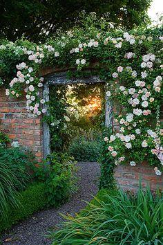 Wollerton old hall, shropshire. Rosa 'phyllis bide' over doorway from long walk into croft garden. Entrance. Vista www.clivenichols.com