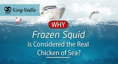 Why Frozen Squid is Considered the Real Chicken of Sea?
