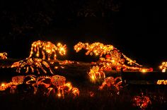 "Killer Pumpkin Arrangements at the Great Jack O'Lantern Blaze ""Held every year in New York, the Great Jack O'Lantern Blaze is a Halloween event featuring some hand-carved,."