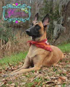 Pet Photography by Yvonne's Photography Wilmington NC 910-793-3990