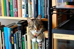 The joys of books and cats.