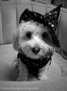 Witch - Halloween Costumes for Dogs - YourDesignerDog