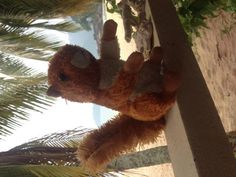 Found at Tioman Ferry - mersing to Tioman on 25 Aug. 2015 by Else: We found a cuddly squirrel on the Ferry from Mersing to Tioman Island today. Tioman Island, All Is Lost, Lost & Found, Pet Toys, Little Boys, Squirrel, Asia, Teddy Bear, Boat