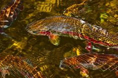 click the image to see what is biting in the fishing world!