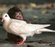 Inspiring picture animal, animals, awww, bird, cuddle, cuddling. Resolution: 400x310 px. Find the picture to your taste!