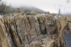 Lichen and rock via @SeanReaganPhoto #macrophotography #Mexico #nativeflora