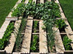 Wooden pallet vegetable garden