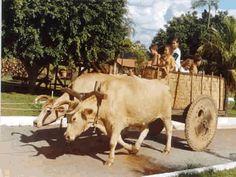 carro de bois | Carro de Boi | Cultura Nordestina