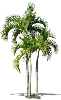 three cut out palm trees