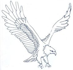 1000 Images About Eagles On Pinterest Bald Eagle Eagle Drawing And