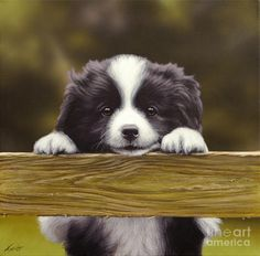 Border Collie puppy, looking and smiling over the fence. Spaniel Puppies, Baby Puppies, Cute Puppies, Dogs And Puppies, Border Collie Puppies, Collie Dog, West Highland Terrier, Cute Dogs Breeds, Dog Breeds