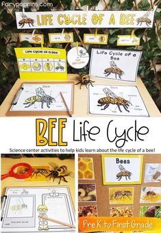 These bee life cycle activities help kids learn about the life cycle of a bee. These science center activities include banners, signs, labels, worksheets and real photos of bees! They're great for kids in Pre-K, Preschool, First Grade / 1st Grade and even Second Grade / 2nd Grade. #lifecycleactivities #beelifecycle #bee #beeactivities #beecenters #lifecyclewheel #sciencecenter #prekscience #kindergartenscience #firstgradescience #labelling #secondgradescience #1stgrade #2ndgrade Kindergarten Science Activities, Kids Learning Activities, Science Ideas, Elementary Science, Insects For Kids, Bee Life Cycle, Second Grade Science, Summer Science, Nature Study