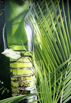 Emerging Nikau, NZ native palm            Painter: Allan Batt
