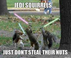 Jedi squirrels...