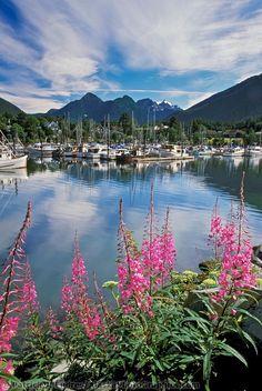 Sitka, Alaska. Love the Raptor Center! So beautiful in Sitks!