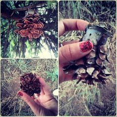 Not just another pine cone #geocache