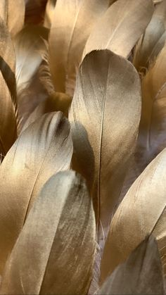 Pin by Angelika on wallpaper in 2020 Feather Wallpaper, Fall Wallpaper, Screen Wallpaper, Wallpaper Backgrounds, Iphone Wallpaper, Golden Wallpaper, Beige Aesthetic, Aesthetic Colors, Leaf Background