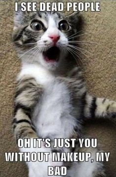 Can anything brighten a day quite like a funny cat? Here is the latest collection of funny cat memes and grumpy cat meme that can blow your mind. Funny Grumpy Cat Memes, Cute Cat Memes, Funny Animal Photos, Funny Animal Jokes, Funny Animal Videos, Cute Funny Animals, Funny Animal Pictures, Funny Pet Quotes, Funny Kittens