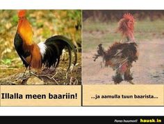 Hilarious Pictures of the week, 121 pics. Before And After Party Rooster Pictures Of The Week, Cute Pictures, Animal Pictures, Funny Images, Funny Photos, Silly Photos, Funniest Pictures, Hilarious Pictures, Clean Jokes