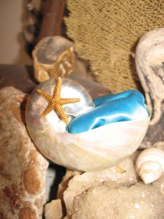The Proposal Shell- Great Pocket Sized Engagement Pearl Finish Nautilus Shell with Pillow- One Great Way to POP the Big Question - product images  of