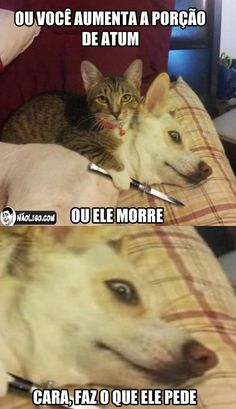 coitado do dog Animals And Pets, Funny Animals, Cute Animals, Funny Images, Funny Pictures, Nerd, Best Memes, I Love Cats, Dog Cat