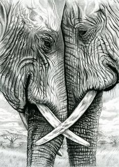 Elephants in pencil and charcoal 5 x 7 Giclee. Togetherness Elephants in pencil and charcoal 5 x 7 Giclee. Elephant Love, Elephant Art, Elephant Sketch, Elephant Drawings, African Elephant, Animal Drawings, Pencil Drawings, Charcoal Drawings, Pencil Art