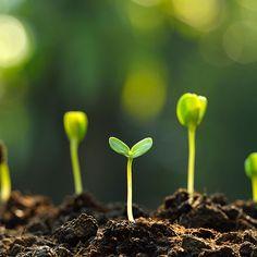 Hydroponics Gardening No-Till Gardening: An Easier Way to Grow - No-till gardening can enhance your soil's health as well as saving you time and effort. Hydroponic Farming, Hydroponics, Hydroponic Growing, Organic Gardening, Gardening Tips, Gardening Books, No Till Garden, Soil Improvement, Mother Earth News