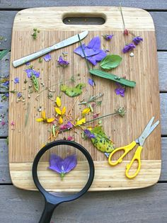 Dissecting Flowers: Playful Learning