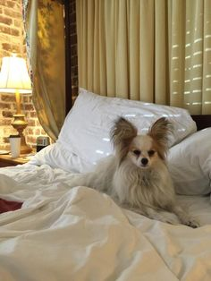 Pet Friendly Hotels In Savannah Aren T Just Dog They Cater To Them