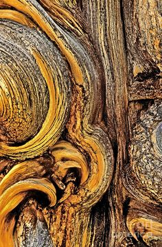 Bristlecone Pine Bark Detail White Mountains Ca Photograph