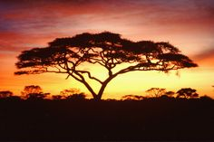 TREE OF LIFE AFRICA - YourArt.