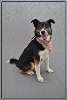 Benek - jeden z psiaków, które przechodzą szkolenia pod okiem DogExperta :) #psy #adopcja #schronisko #expert #dogs #shelter #adopt