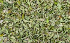 Learn more about the types of mold that form on cannabis during the drying and curing process, and find ways to prevent mold while curing your crop.
