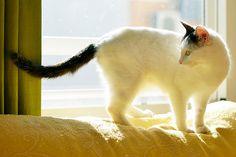 http://adopcionesfelinas.foroactivo.com/t898-noah-preciosa-gatita-cruce-van-turco-dulce-y-juguetona-esterilizada-nacida-en-junio15-en-adopcion-valencia