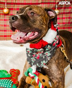 Giving pets as gifts gets a bad rap, but recent studies show that there's no proof to support the fears associated with pets as presents. Read our tips for what to consider about the recipient first: www.aspca.org/blog/yes-its-okay-to-give-pets-as-gifts