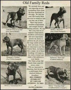 Uplifting So You Want A American Pit Bull Terrier Ideas. Fabulous So You Want A American Pit Bull Terrier Ideas. Rottweiler Training, Rottweiler Puppies, American Pitbull, Dog Games, Bull Terrier Dog, Best Dogs, Dog Breeds, Red Nose, Photos
