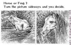 What is it a frog or a horse