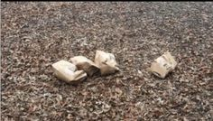 Lifeless Animals Found Stuffed In Bags In Sacramento Park! Demand Punishment Now! | PetitionHub.org