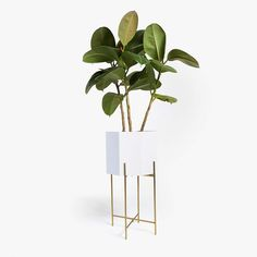 LACQUERED PLANTER WITH GOLDEN BASE - DECOR ACCESSORIES - DÉCO | Zara Home United States of America