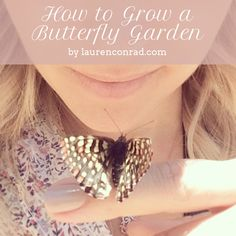 How to attract butterflies and honeybees to your garden!